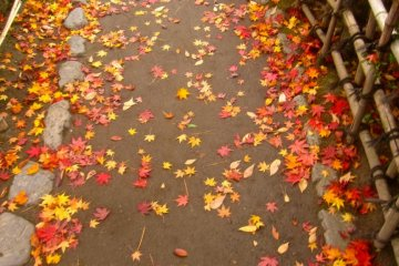 Leaves on a path of the Rinkaku Tea House garden