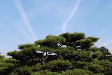 One of the garden's 29000 carefully tended trees