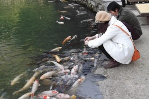 Feeding the fish on the lakeshore in the south garden