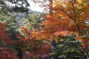 Autumn's rich colors