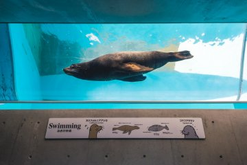 A seal swims by in its tube