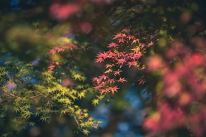 Early autumn colors at Korakuen