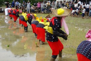 Costumed participants plant the year's first rice crop in Arao