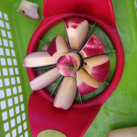 เก็บแอปเปิลในเดือนตุลาคม