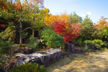 Great autumn colours