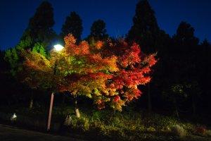Dedaunan musim gugur memamerkan warna-warna cemerlangnya