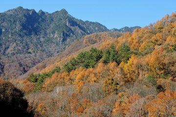 Суровые голубые горы образуют фон для осенних красок