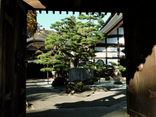 View framed by the gate