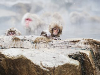 A young macaque
