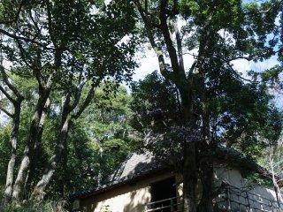 Yamashita house