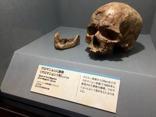 Bản sao hộp sọ của người Cro-Magnon