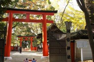 ประตูโทริกลางป่า ทะดะซุ-โนะ-โมะริ (Tadasu-no-Mori)