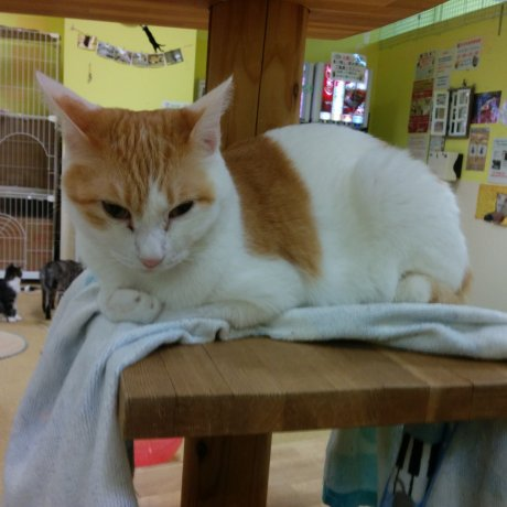 Fukushima City Cat Cafe