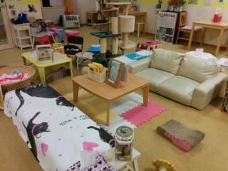 Human lounge area