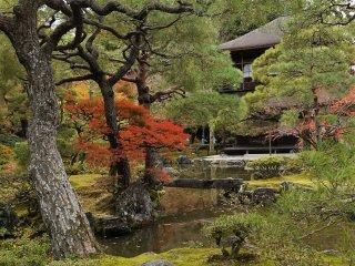ต้นมอส ต้นสน และใบไม้สีแดง
