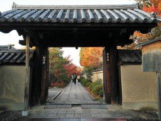 ประตูวัดสุดสวยกับใบไม้เปลี่ยนสี มนต์เสน่ห์แห่งวัดไดโตะคุจิ