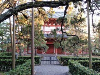 ต้นสนเก่าแก่หน้าอาคารวัดสีแดง