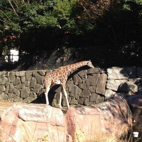Vườn bách thú Kanazawa ở Yokohama