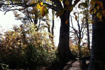 Shinetsu Trail, Part 3