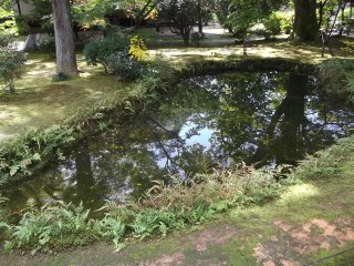 Reflections in the still, clear pond