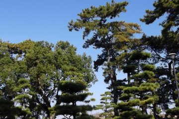 Carefully pruned trees in the rock garden