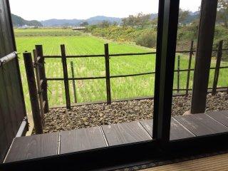 Насладитесь видом рисовых полей пока едите лапшу