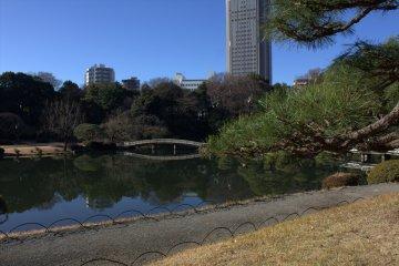 冬季的新宿御苑國家公園