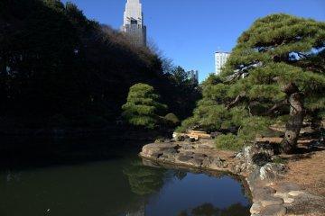 城市景觀與綠意的對比