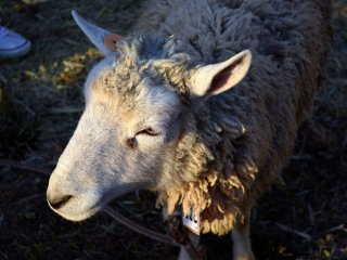 Soft and woolly body