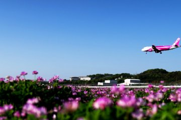 Fly Direct from Bangkok to Okinawa