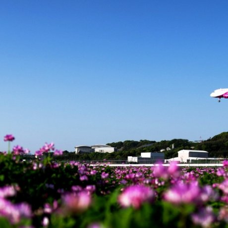 Fly Direct from Bangkok to Okinawa