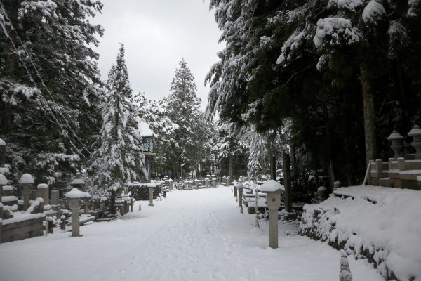 Along the path in the graveyard