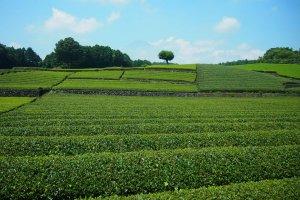 Blue skies, green fields