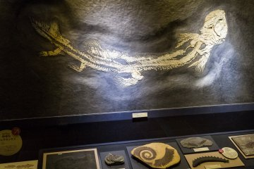 The world's largest specimen of Orthacanthus senckenbergianus