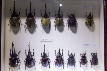 Visit the extensive collection of beetles and other insects