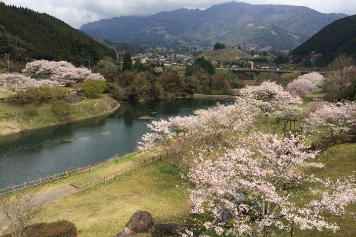 桜の市房ダム