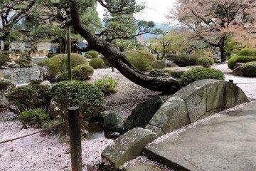 Cherry blossom at Erinji Temple