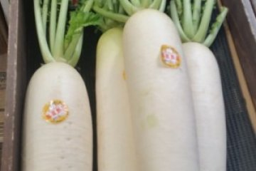 """Massive daikon radish is a much-loved vegetable but """"daikon-ashi"""" (legs of a daikon) is a terrible insult to women!"""