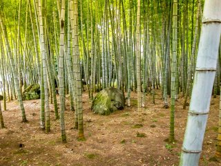 Boasting a bamboo forest, it's hard believe that you are in a public park when walking around this section