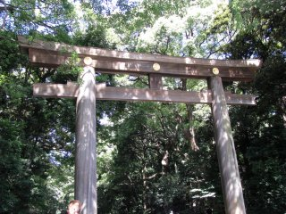Torii at the entrance to Meiji Jingu