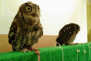 Owl Family Cafe