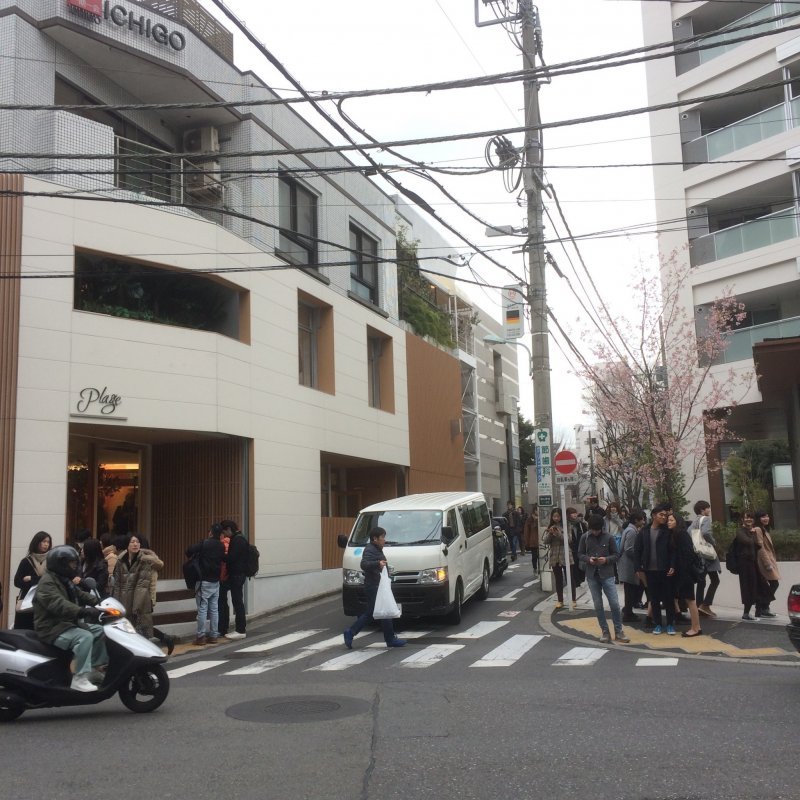 Daikanyama's streets are funky and modern, with sprinklings of cherry blossom from late Feburary