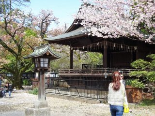 อาคารคะกุระเด็น (Kaguraden) ประดับประดาด้วยดอกซากุระ