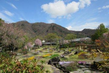 Vườn hoa Obuse