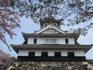 Nagahama castle amongst the cherry or sakura trees