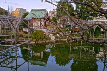 Kameido pond reflections