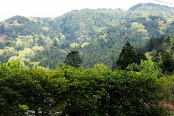 С главной улицы можно видеть лесистые горы вокруг
