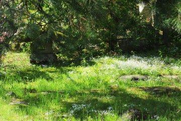 Внутренний сад рёкана