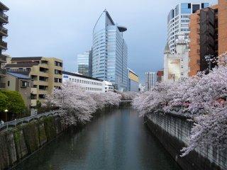ซากุระกับตึกระฟ้า