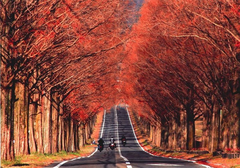 Colored trees in autumn